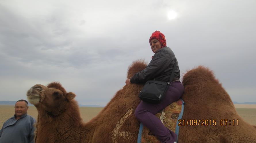 Gentle Bactrian camel ...