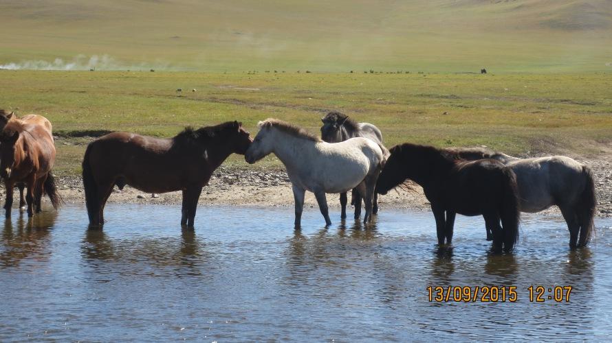 Horses !