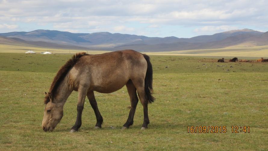 Beautiful horse in a beautiful setting