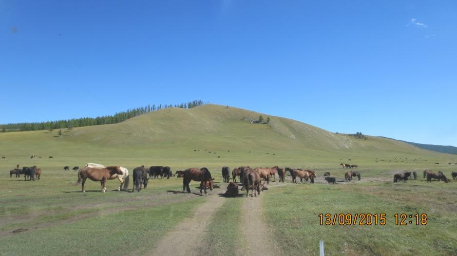 More horses !