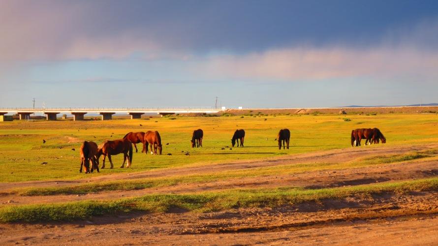 Horses near the Munkh Camp