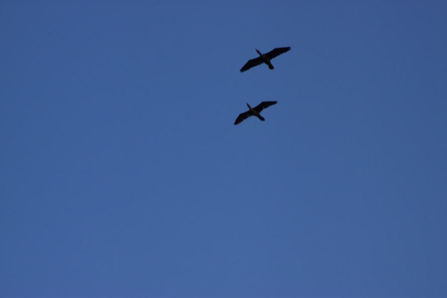 Birds in the sky :)