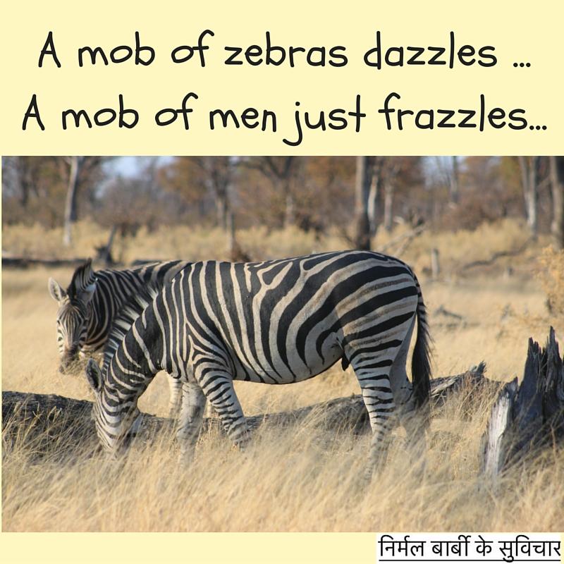 zebras mob