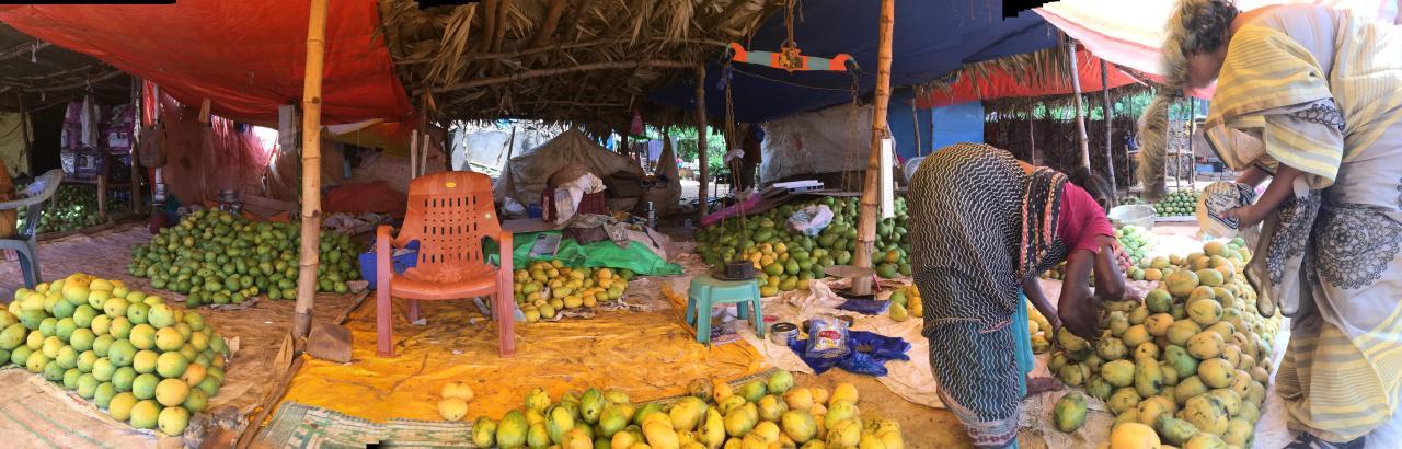 mango sellers pano shot