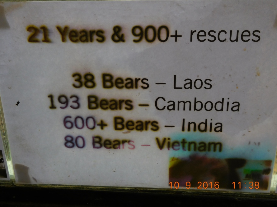 The sad statistics. The bears are captured and tortured to extract bile... its a traditional medicine :(.