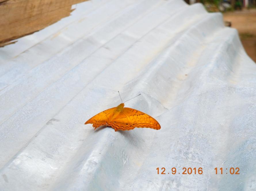 Butterfly posing !